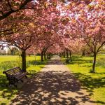 London: the best place to enjoy Spring