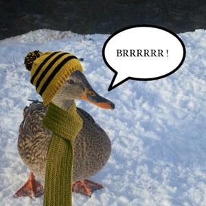 It's freezing cold, even for a duck !