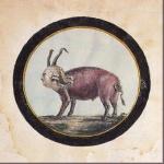 """Louis XVI caricaturé en """"Roi Cochon""""."""